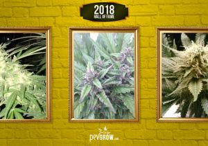 The 20 most famous marijuana plants in 2018