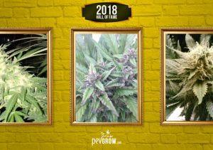 Les 20 plantes de cannabis plus populaires de 2018