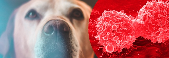 CBD oil to treat your pet's cancer