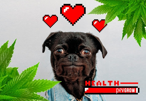 How Cannabis CBD Can Help Your Dog