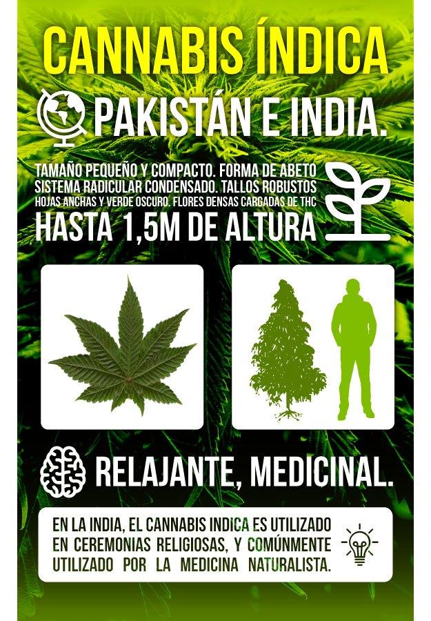 Infografía Marihuana Indica