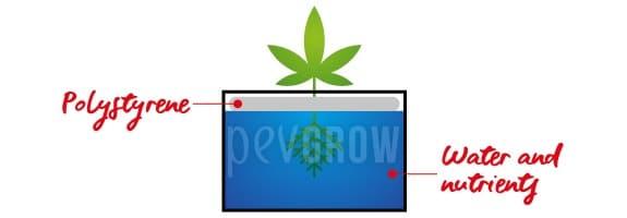 Aquatic culture consists of suspending the plants