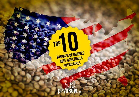 Banques de graines avec génétiques américaines
