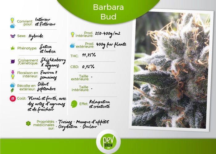 Caractéristiques de la variété Barbara Bud