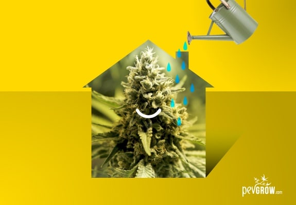 Irrigation water, key to indoor marijuana cultivation