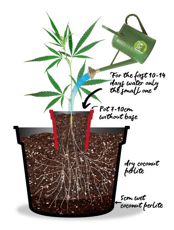 🥇 Top 10 tips for growing autoflowering plants