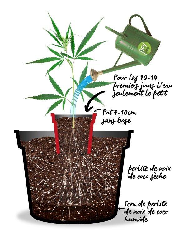 Autoculture pour plantes autofloraison