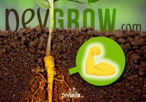 Stimulant de racines maison pour la croissance et la floraison