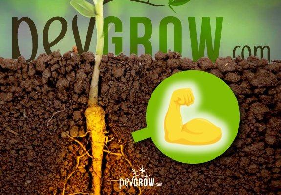 fertilizante estimulador de raíces rico en Auxinas