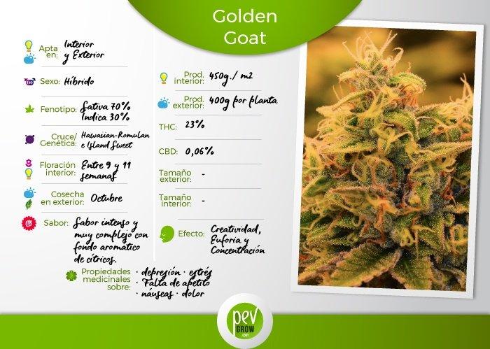Principales caracteristicas Golden Goat