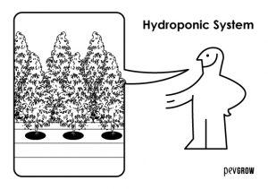 Make your own homemade hydroponic system