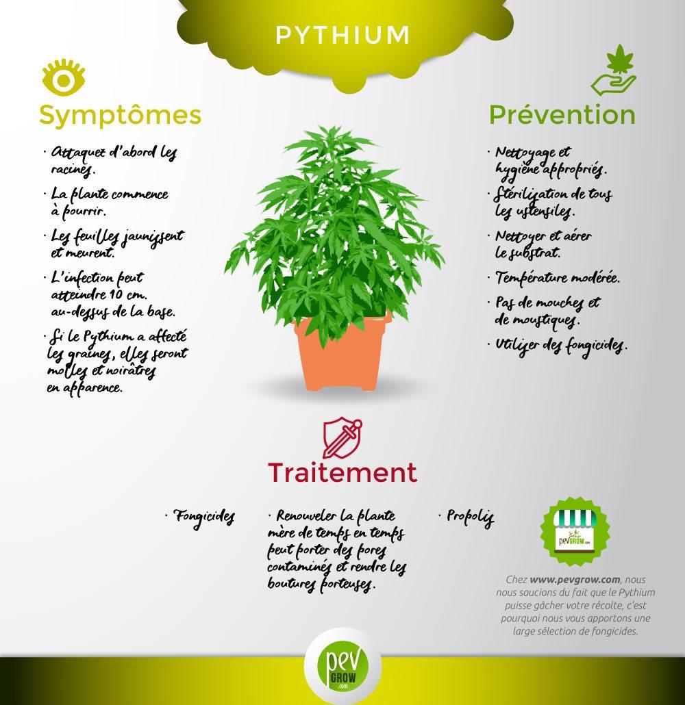 Connaître les caractéristiques du champignon Pythium