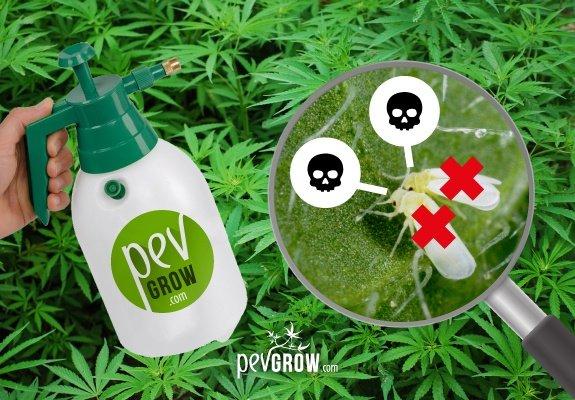 El jabón potásico para tus plantas de marihuana