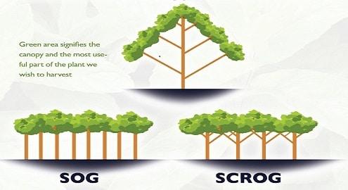 Méthode SOG y SGROG