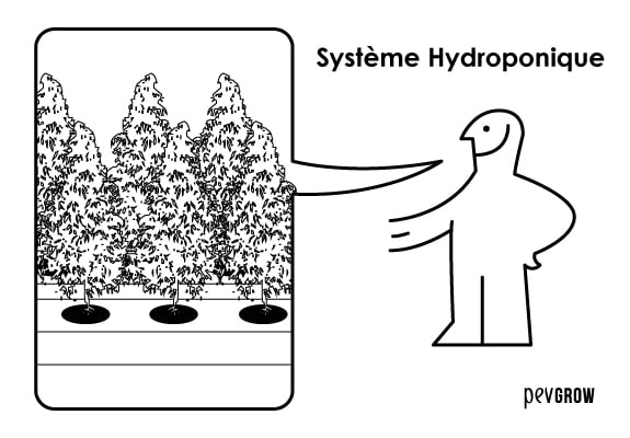 Créez votre propre système hydroponique maison et profitez de ses avantages.