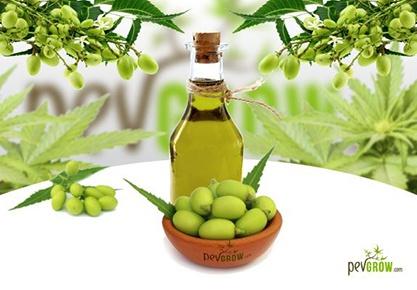 Cómo utilizar el aceite de neem en el cultivo de marihuana