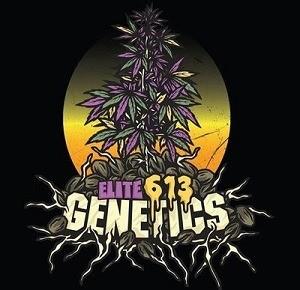 Elite 613 Genetics