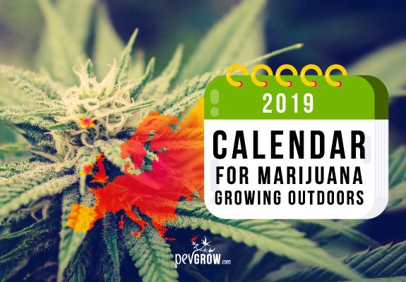 2019 Calendar for outdoor marijuana growing in Europe