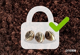 Germinating seeds safely