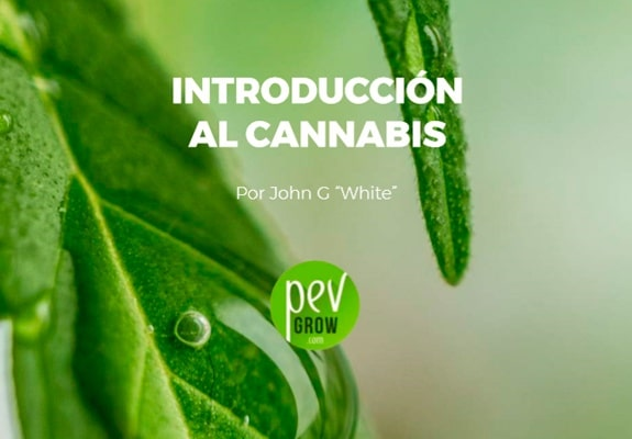 Introducción al cannabis - Pevgrow