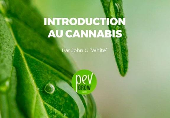 Introduction au cannabis - Pevgrow