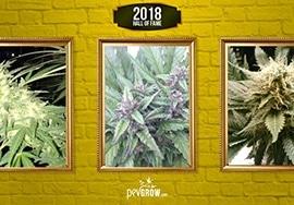 Las 20 plantas de marihuana más famosas en 2018