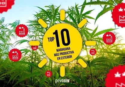 Top 10 Marihuana más productiva en exterior
