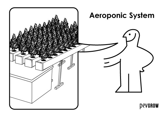 The aeroponic system is the one that guarantees the best results