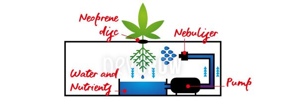 Aeroponic cultivation system: how it works