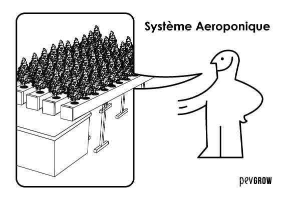 Le système aéroponique est celui qui garantit les meilleurs résultats