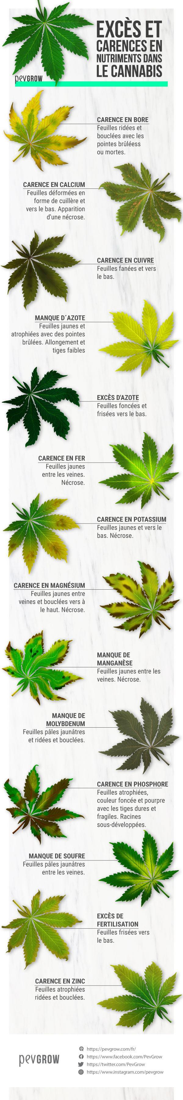 Excès et des carences dans la culture du cannabis