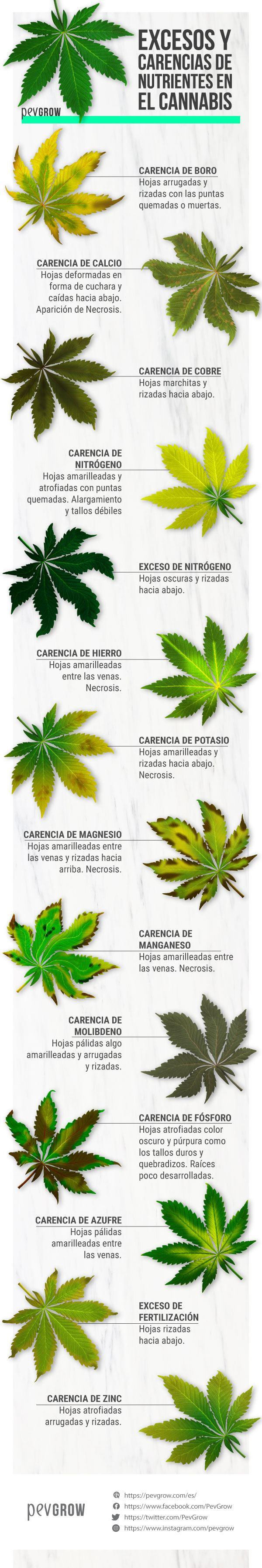 Excesos y carencias a la hora del cultivo de la marihuana