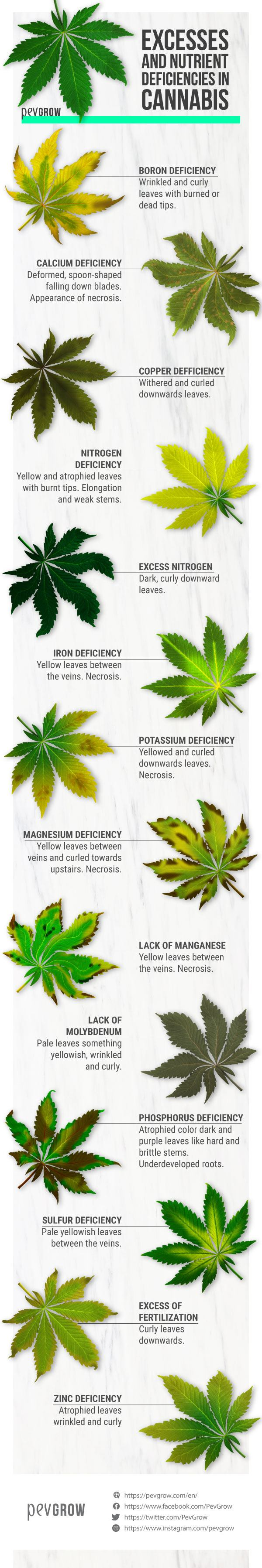 Excesses and deficiencies in the cultivation of marijuana