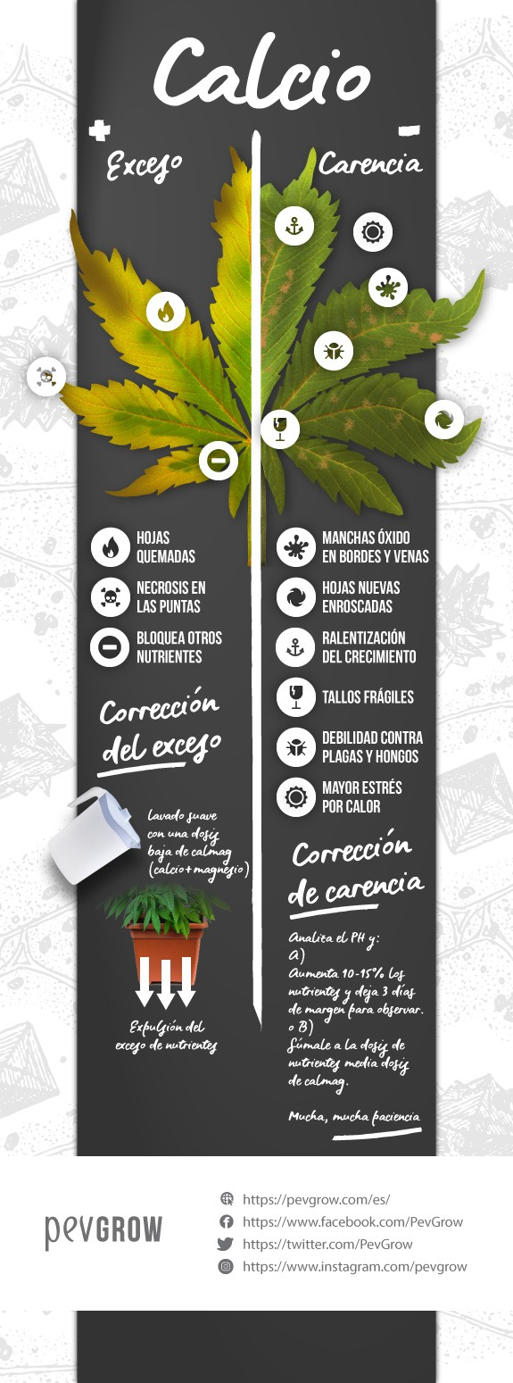 Infografia sobre Carencia o exceso de calcio en tu planta de marihuana