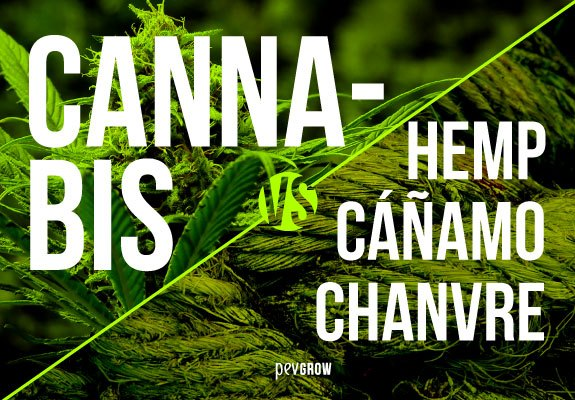 Differences Between Hemp and Cannabis