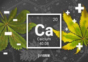 Mancanza o eccesso di calcio nella pianta di marijuana