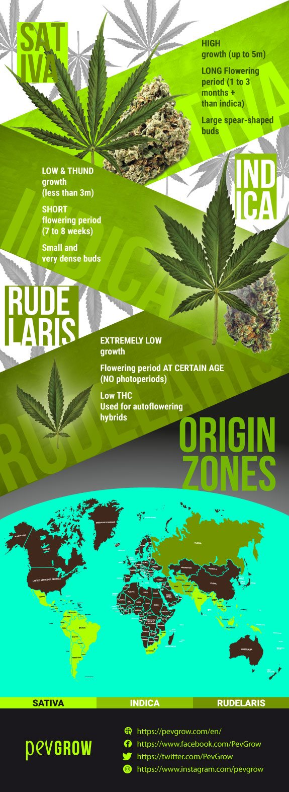 Species found within Cannabis are Cannabis sativa, Cannabis indica, and Cannabis ruderalis