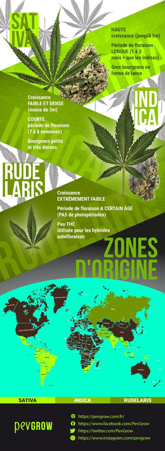 Les espèces incluses dans Cannabis sont Cannabis sativa, Cannabis indica et Cannabis ruderalis