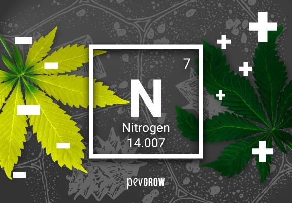 Carencia o exceso de nitrógeno en tu marihuana