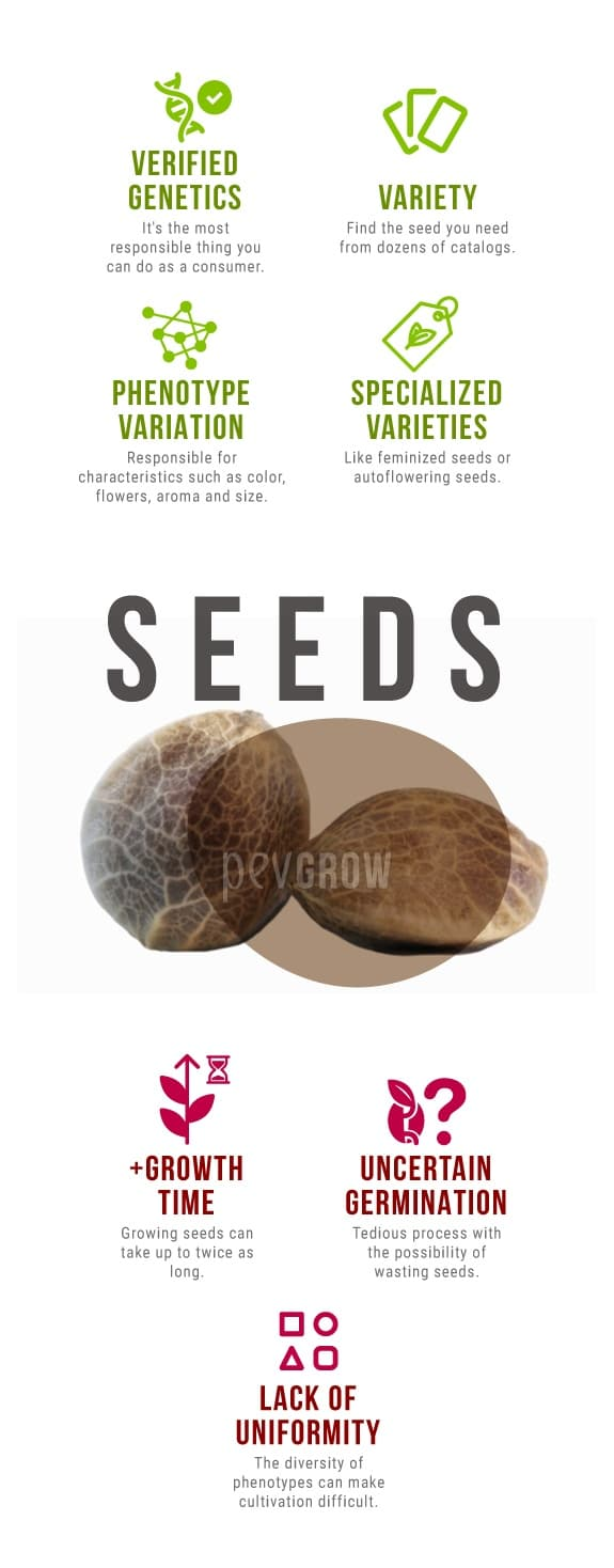 Advantages and disadvantages of using cannabis seeds