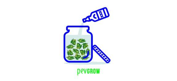 Mete los cogollos de cannabis en el recipiente de vidrio con el alcool