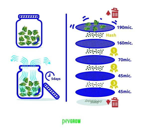 Cómo extraer THC de flores secas, es un métdodo sencillo