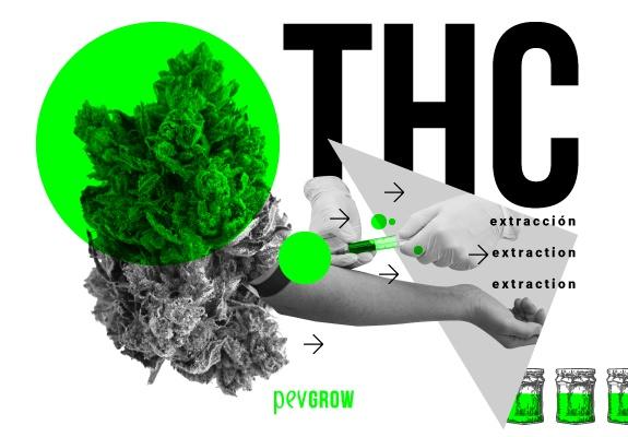 Cómo extraer el THC y todos sus usos
