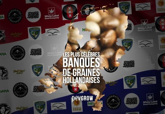 Carte de Hollande remplie de graines de cannabis et en arrière-plan des logos des banques les plus célèbres.