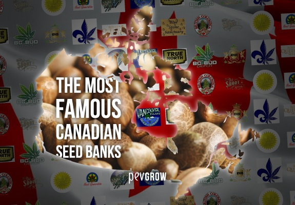 The most famous Canadian seed banks