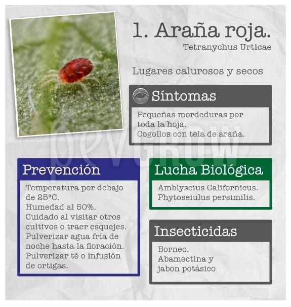 """Identificar la plaga """"Araña roja"""""""