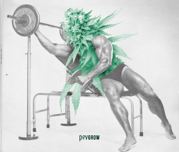 imagen de un montaje fotográfico que representa a una hoja de marihuana haciendo pesas en el gym*