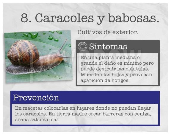"""Identificar la plaga """"Caracoles y babosas"""""""