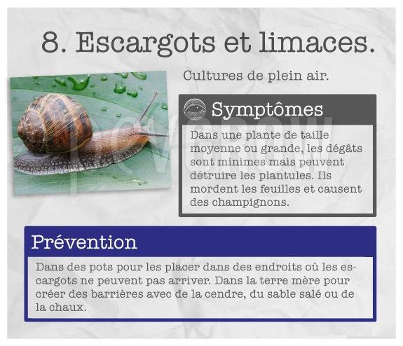 """Identifiez le fléau des """"Escargots et limaces""""."""