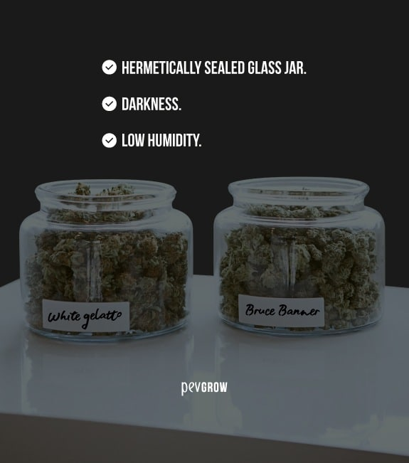 image of a glass jar full of buds for preservation*